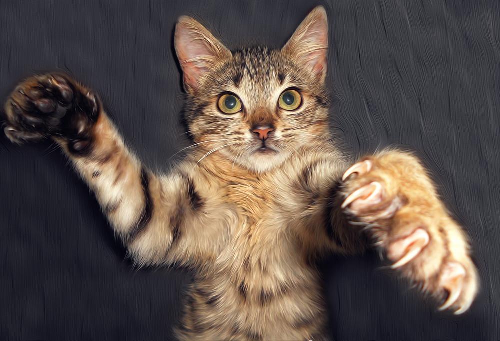 爪 切り いつから 猫